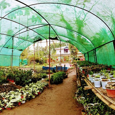 SUCCULENTS, BONSAI,SUMMER FLOWERS ALONG WITH MANY FLOWERING PLANTS ADDS TO THE LONG LIST OF THIS NURSERY