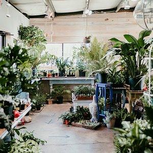 Houseplants and tropical plants at Bees
