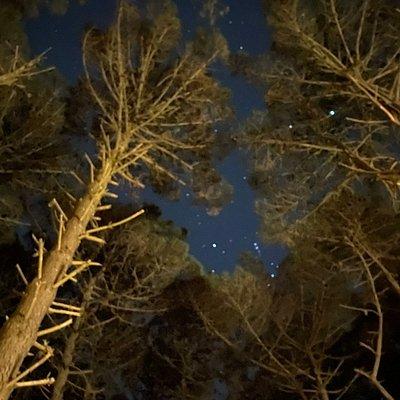 """Caminata nocturna en el """"Bosque Camino Parque de los Pioneros"""""""