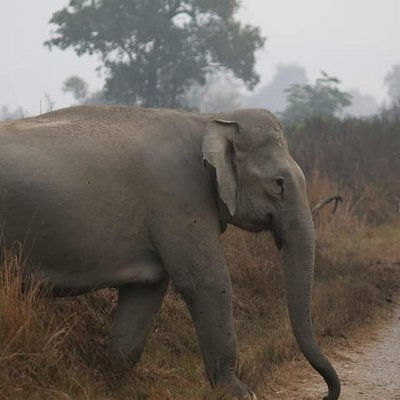 Elephant at Dhikala