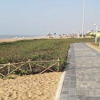 Plantation & Jogging track