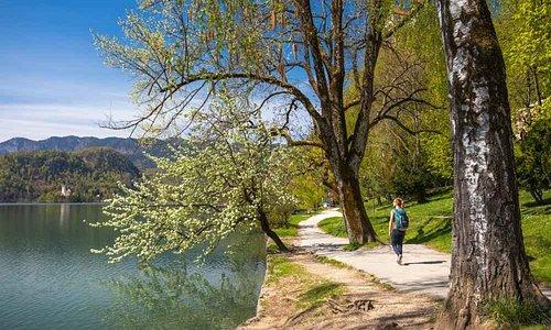Photo: Jošt Gantar, www.bled.si