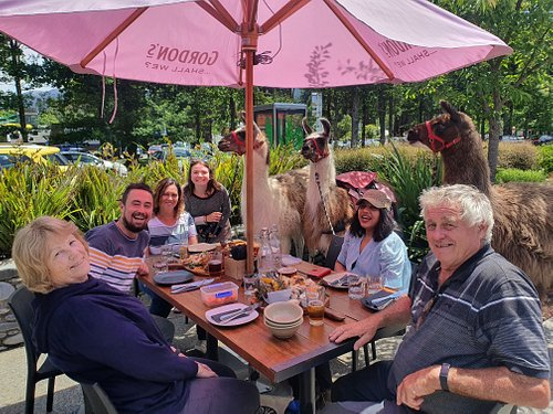 Where else can you brag you've had lunch with a llama!  Our 3 hour guided tour is fun and relaxing, taking in a village stroll in the scenic alpine village of Hanmer Springs.  You're sure to be a drawcard so we'll head for some quiet time in parklike surrounds then it's off to a local restaurant for 'lunch with a llama'.  These llamas are gentle boys with great table manners; you'll be won over!