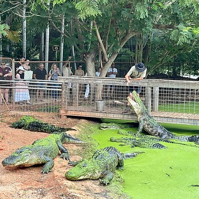 The famous Malcolm Douglas Crocodile Park feeding your is a Broome must do your! If you need transport to the venue 20 mins out of town then Broome and Around's your is perfect for you. Bookings essential. We can't wait to welcome you.