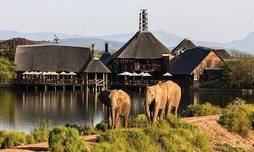 Elephants roaming freely at Lodge