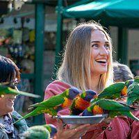 Lorikeet Feeding at Currumbin Wildlife Sanctuary