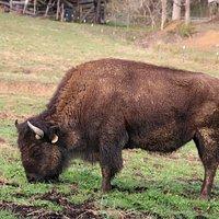 Brown Buffalo Farm
