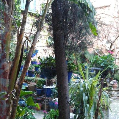 Plantas del jardín