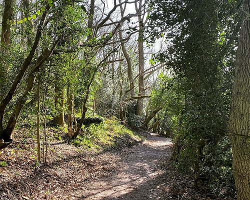 Footpath in Bolehill Wood