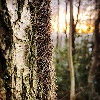 Trees in Bolehill Wood