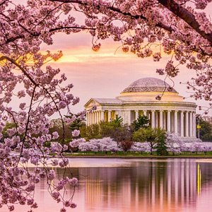 Cherry blossom near the Tidal Basin and nice view of the Thomas Jefferson Memorial.
