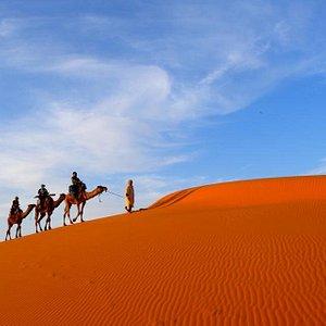 camel sahara tours