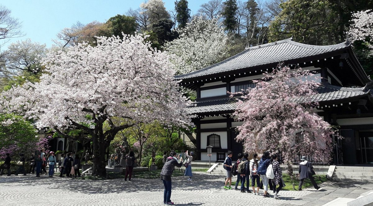 長谷寺(神奈川・鎌倉