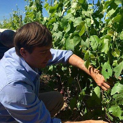 L'impegno e la passione per la viticoltura