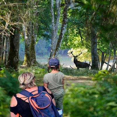 A la découverte de la faune européenne du parc à la croisée d'un chemin