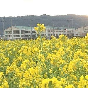 Nanabatake road, Kamogawa Chiba,Japan Open Jan.to Mar.