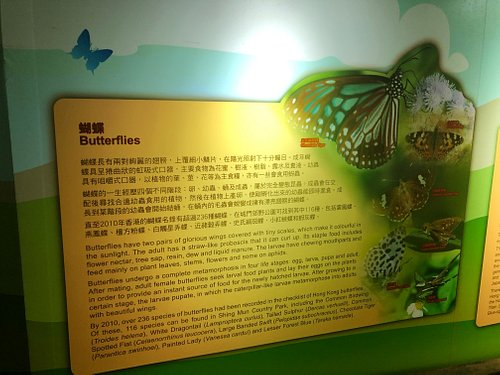 Shing Mun Country Park Visitor Centre - local butterflies