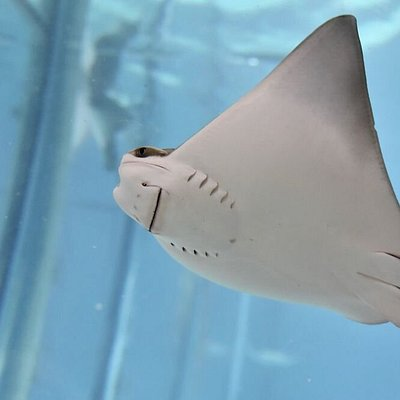 Looking for fun things to do in Baton Rouge? Experience family fun by touching and feeding stingrays at Blue Zoo.