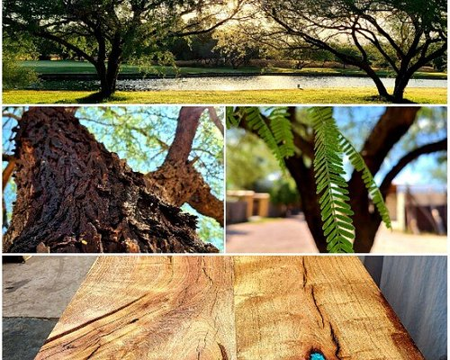 From tree to something magnificently mesquite!!