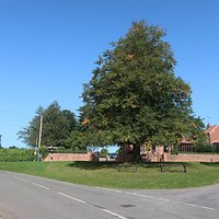 Oak planted to commemorate Queen Victoria's Diamond Jubilee.