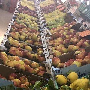 Apples ....