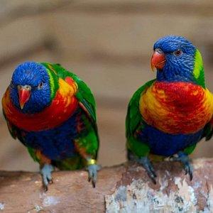 Papugarnia Mazury