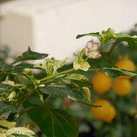 растение в овощном зале