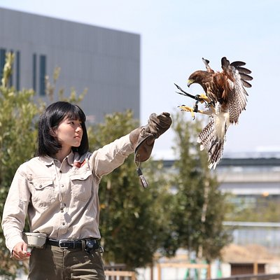 Free Flight Bird Performance