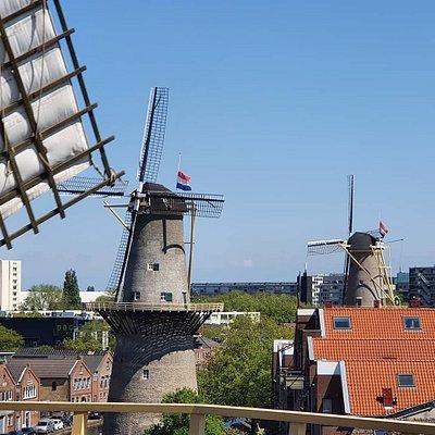 a view from Windmill De Vrijheid in Schiedam