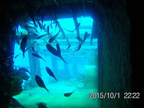 fish inside c53