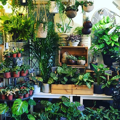 This little shop is full to the brim with wonderful houseplants.