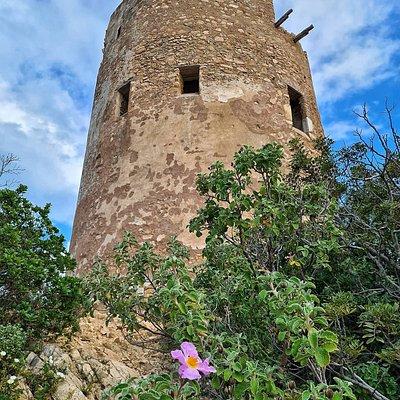 Torre Murtas ❤