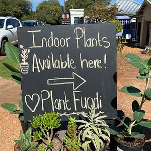 Plant Fundi