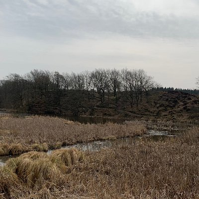 Terrænet omkring vandkraftsøen