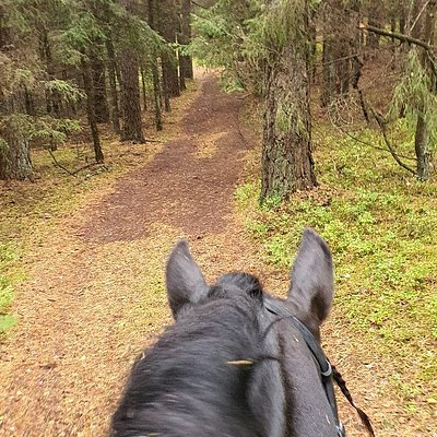 Ausros zirgynas