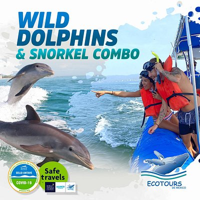 Lets swim with the free wild dolphins