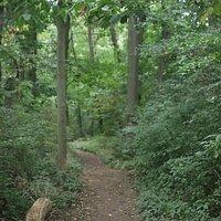 Hiking or walking