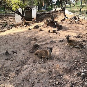 Loh e Bher Wildlife Park in Rawalpindi has lions, an aviary and Uryal mountain goats. https://how2havefun.com/travel/lion-lohi-bher