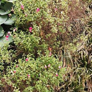 El jardín vertical en primavera.