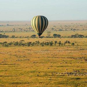 Serengeti can be teeming with wildlife