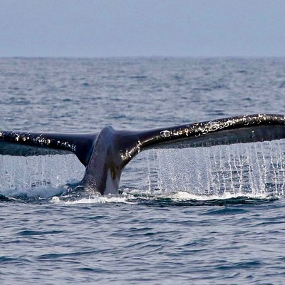 1 & 1 1/2 hr Whale Watching Tours
