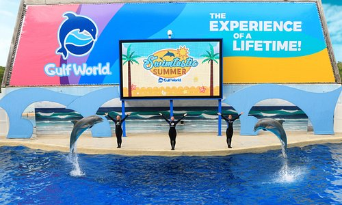Exciting Dolphin Show