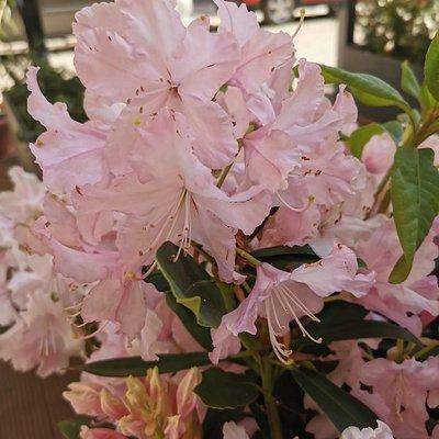 Flores en la terraza de la calle.