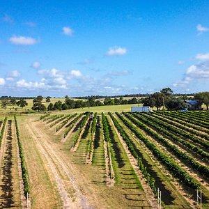 Rising Sun has seven grape varietals planted on 5 acres.