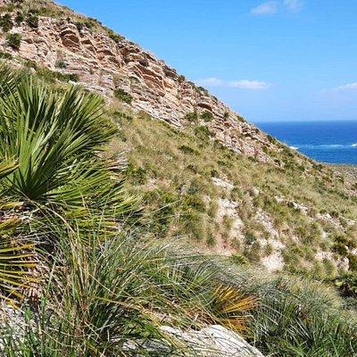 Le propaggini di Monte Cofano si allungano verso il mare ....