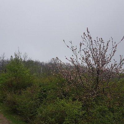 Sentiero per il parco di Cerwood
