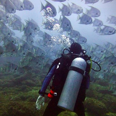 Spade fish with diver