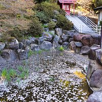 八幡山大雲寺:桜の花びらが浮く池がありました
