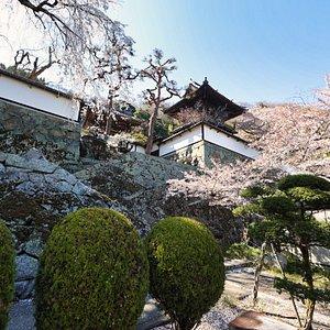 八幡山大雲寺:城郭のような石垣と桜