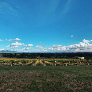 Yarra Valley Greenstone Vineyards